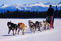 Dog team in front of the lodge (1997)